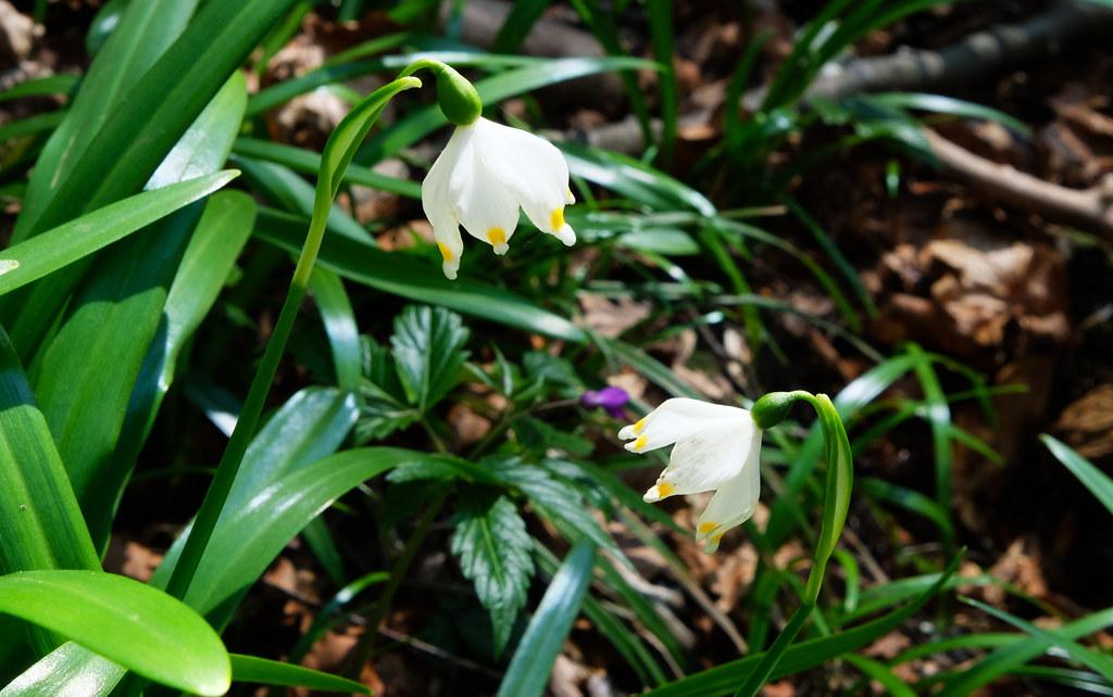 Wildflowers in Transylvania's Apuseni Mountains