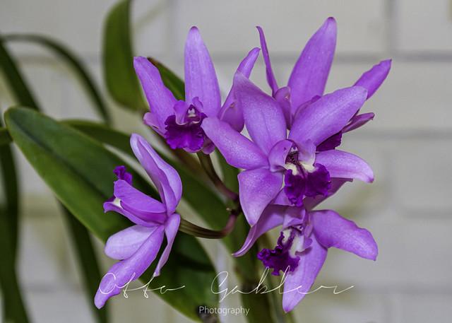 Orchids_Ulladulla-1020