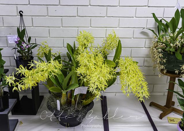 Orchids_Ulladulla-1032