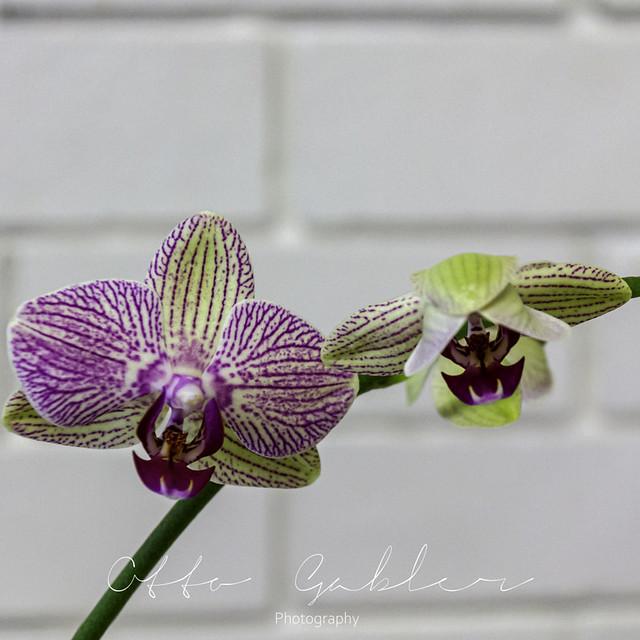 Orchids_Ulladulla-1027