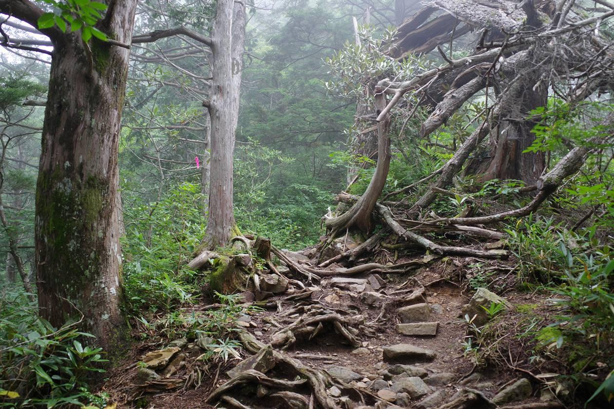 爺ヶ岳登山道 序盤の樹林帯