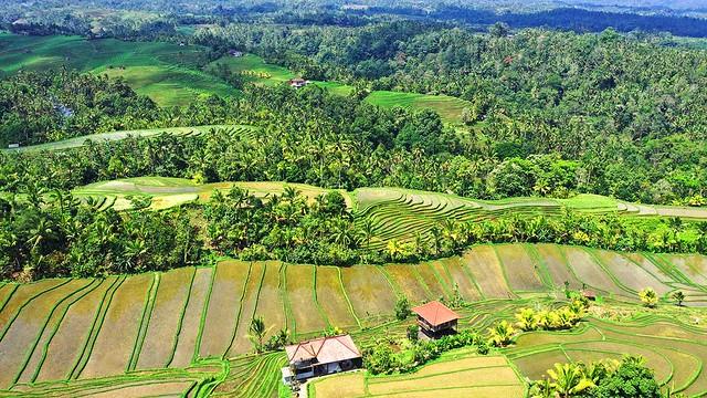 Village View 8