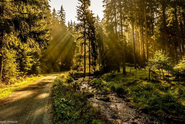 Morgens im Elfenwald