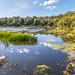 Bosherston Lily Ponds, Stackpole Estate, Pembrokeshire