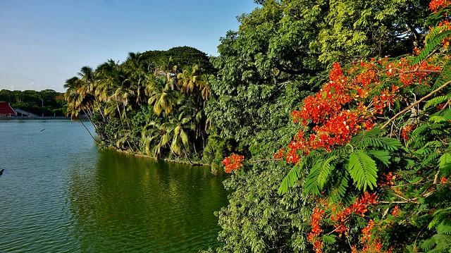 MEXICO, Yucatán ,  Tabasco, Villahermosa- Parque, 19273/11948