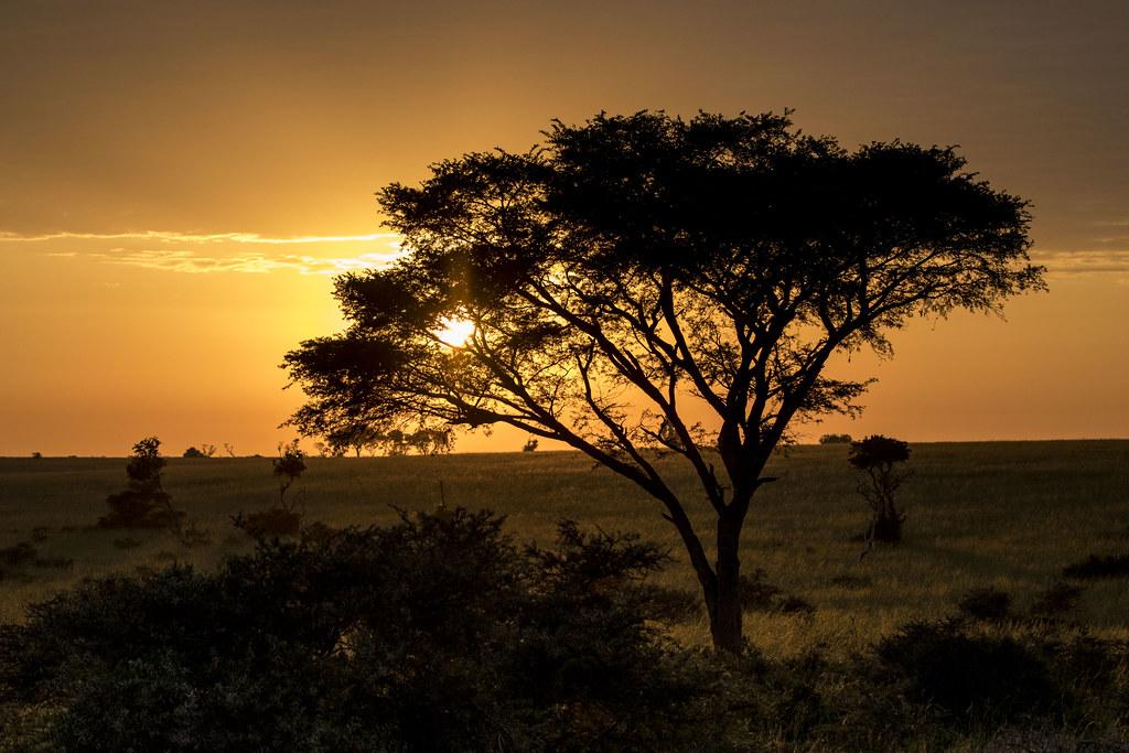 Amanecer entre acacias