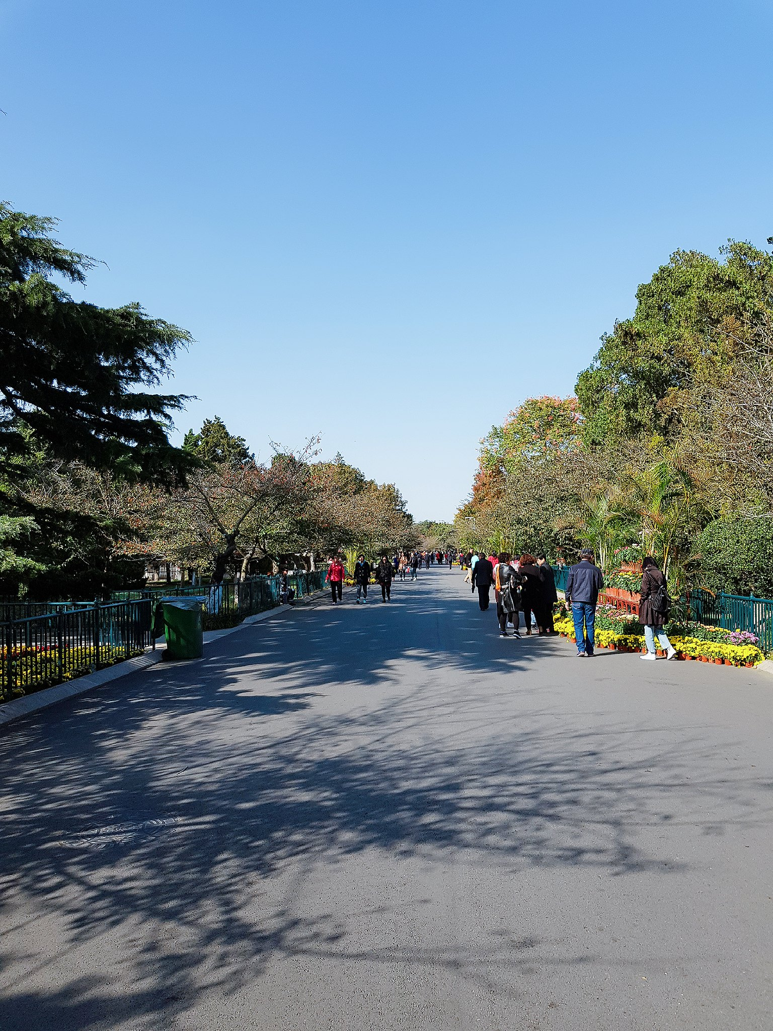 Tsingtao