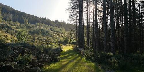 path road greenroad slichonamara countryside green nature connemara ireland landscape cameraphone sunshine beauty trees shadows