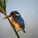 Botswana - 06082019-17-35-34-_DSC2231.jpg