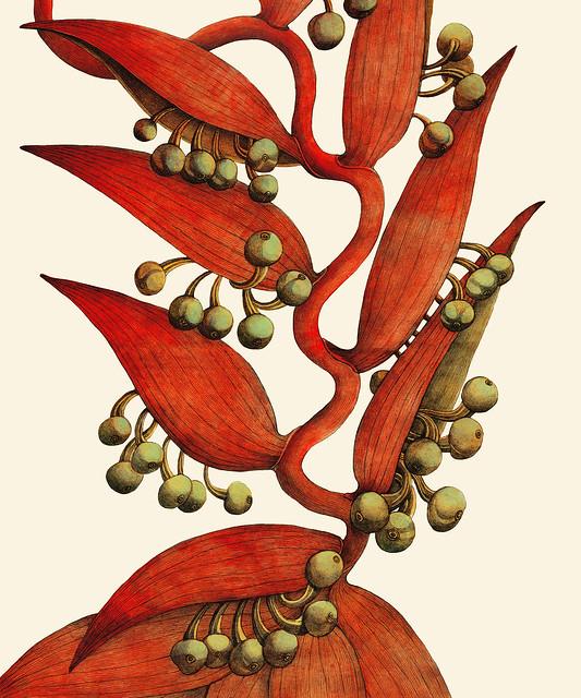 sordflower