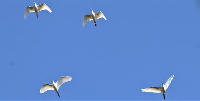 Symphonie aérienne...
