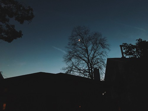 iphone iphoneography iphonexsmax iphone10smax vsco vscocam la losangeles sunset moon moonlight tree sky treesilhouette silouette night nightsky