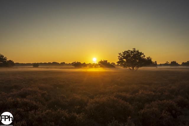 Golden Sunrise over Moorland