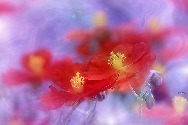 Red flowers. A Slider:-)