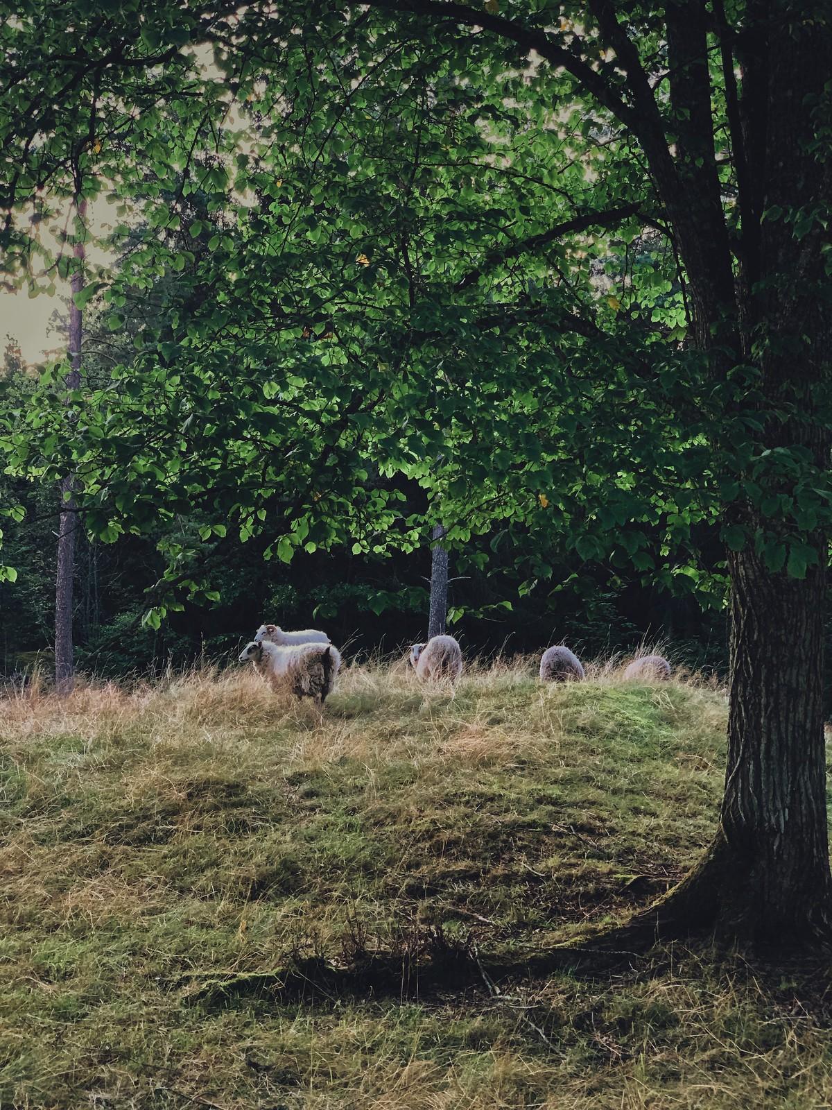 fårhagen