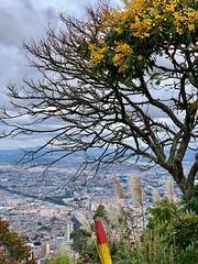 Above Bogota