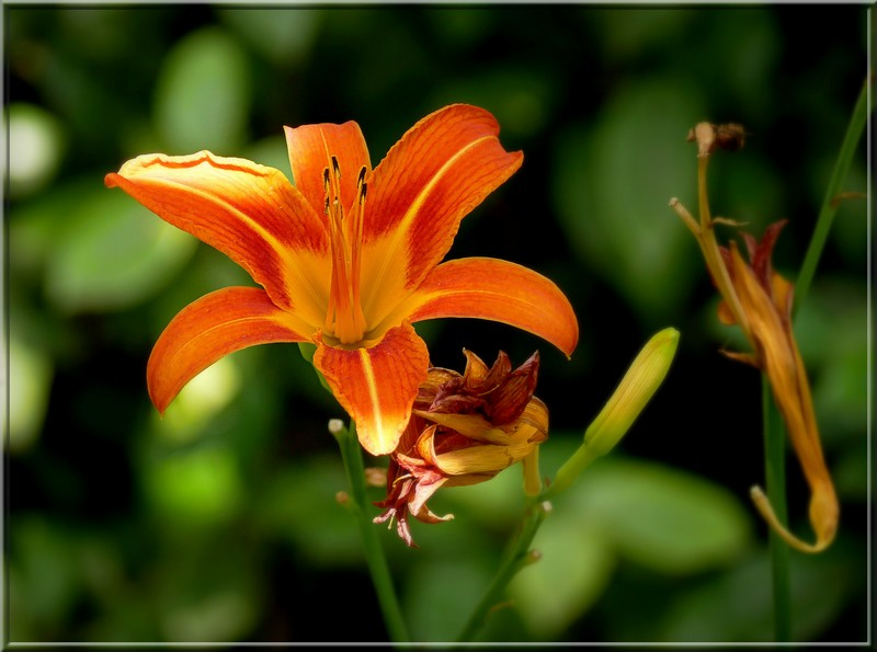 Au jardin des plantes. - Page 4 48738641211_b72a13f01c_b