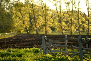 April fields