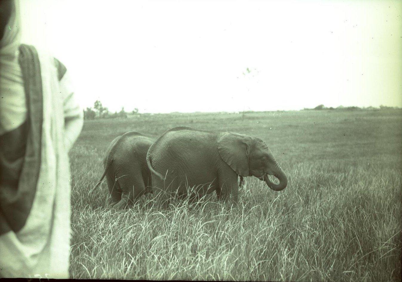 353.1899. Абиссиния, Аддис-Абеба. Слоны