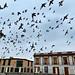 Loft of Pigeons