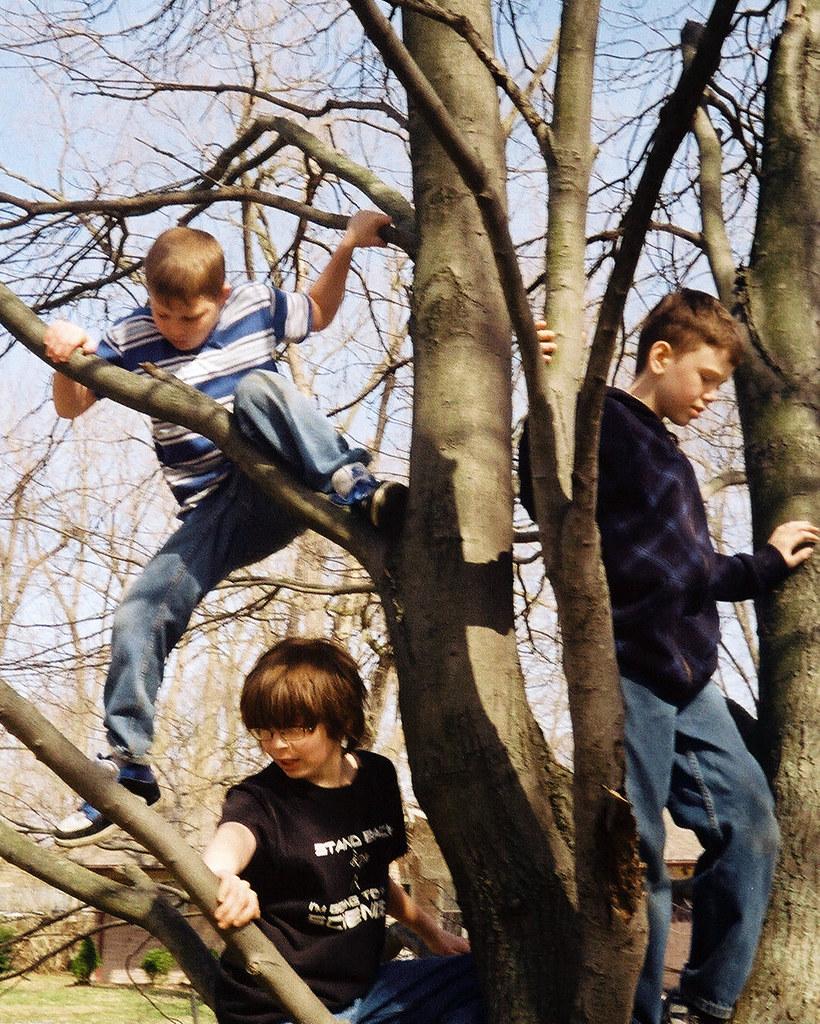 Tree-climbing days
