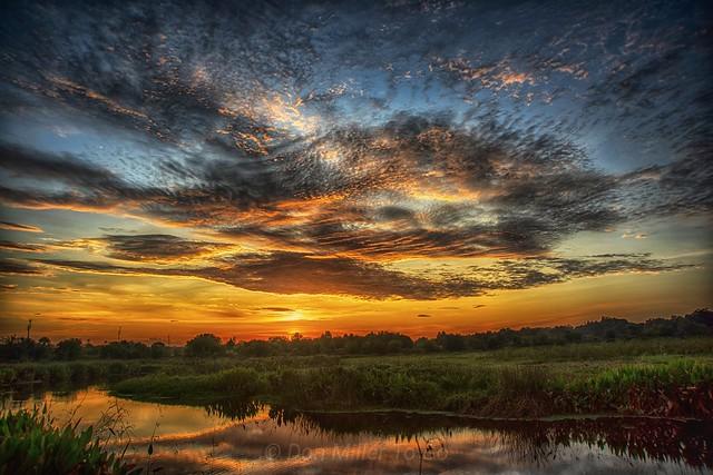 Golden Florida Sunrise 🌞