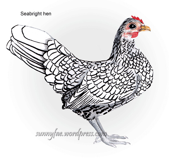 Seabright hen drawing