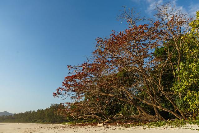 20190820-DSC06802 Sumba. Tarimbang. Future campsite tree