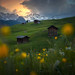 Los campos de Heidi
