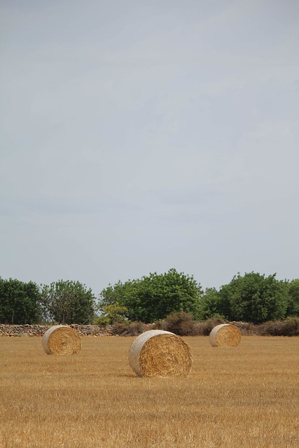 Tres tristes rulos de trigo.