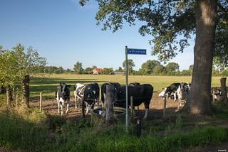 Halle; Meuweg