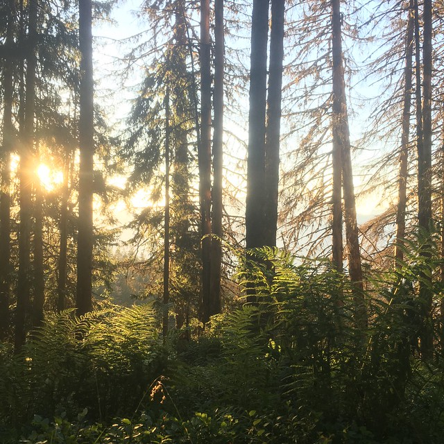 #trail #sunset #forest #montagne
