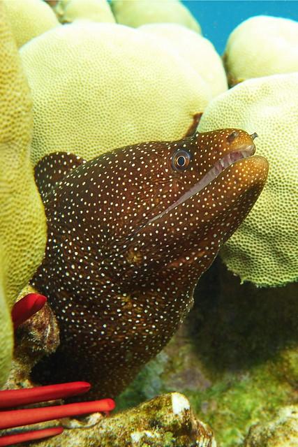 macro moray