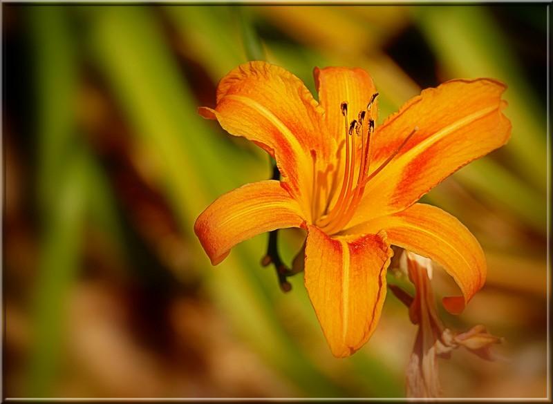 Au jardin des plantes. - Page 5 48742284363_347204be14_b