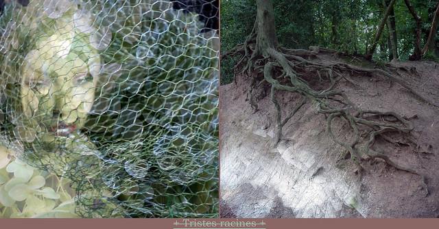 Sad Roots