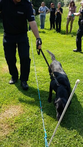 A cadaver dog and trainer inspect an area of ground which has been mapped out and augured