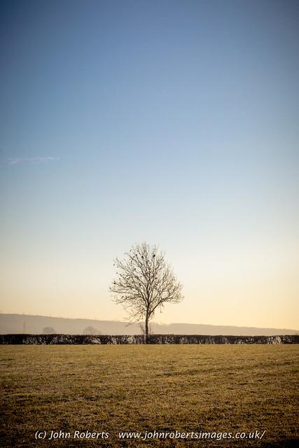 Single Tree, Hedge & Field.  Yealand Redmayne, Lancashire, UK