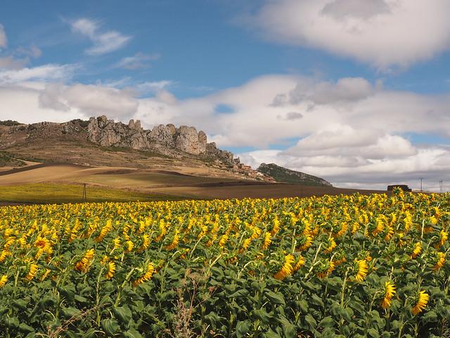 Paisaje riojano/ Riojan landscape