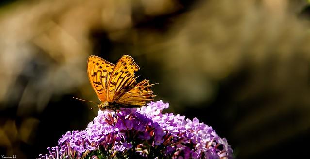 Butterfly - 7410