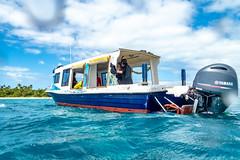 Tonga Island Lunch Break Snorkel-6