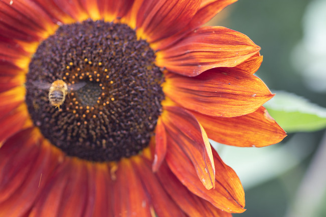 Set the controls for the heart of the Sunflower...