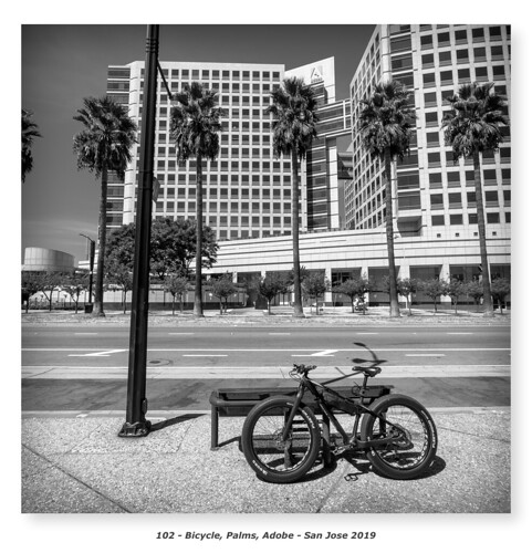 Bicycle, Palms, Adobe | by Godfrey DiGiorgi