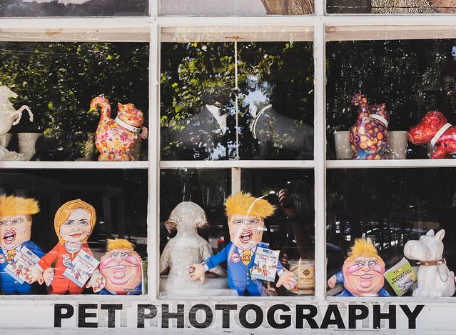 pet photography (New Hope PA)