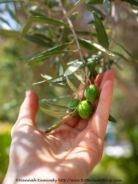 Olea Essence - Olives