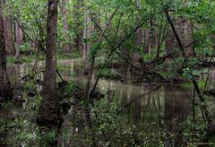 Guts and Sloughs, Congaree National Park, South Carolina