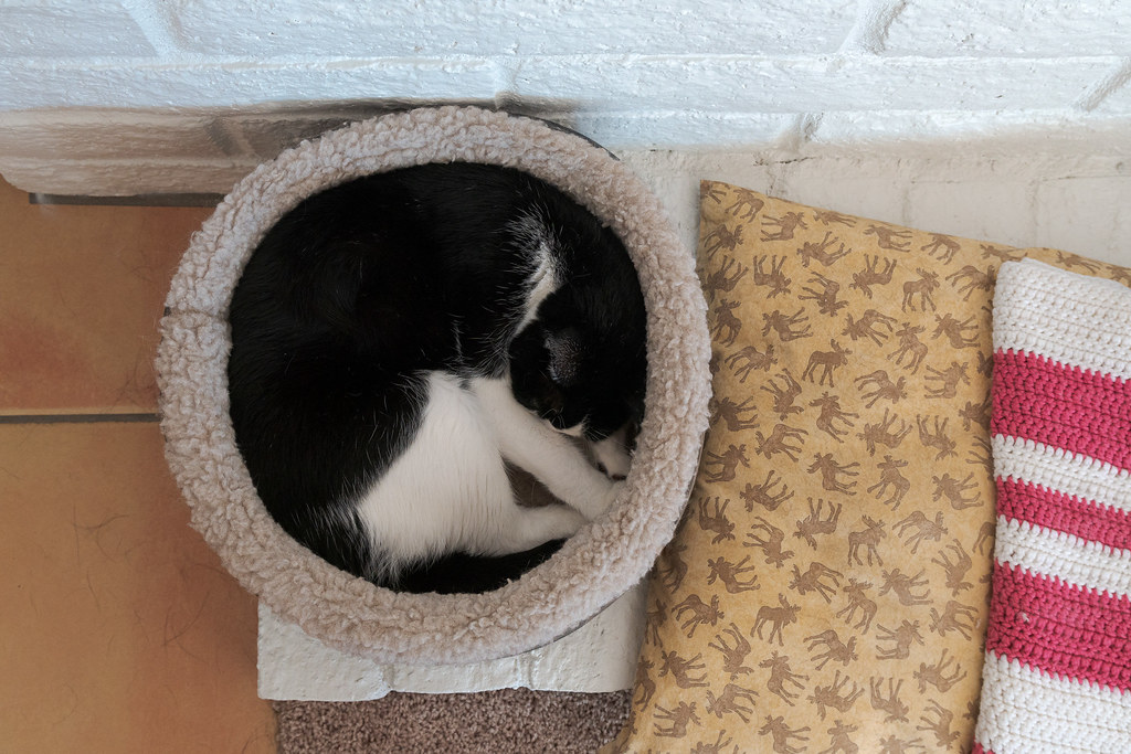 Our cat Boo sleeps curled up in a circle in a cat bed beside the fireplace of our rental house in Scottsdale, Arizona in November 2018