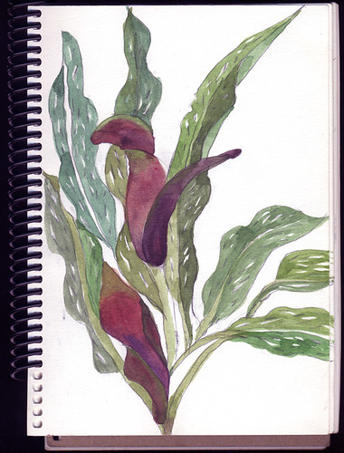 Watercolour of a burgundy calla lily in bloom