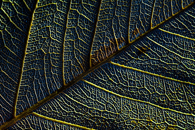 The veins of nature