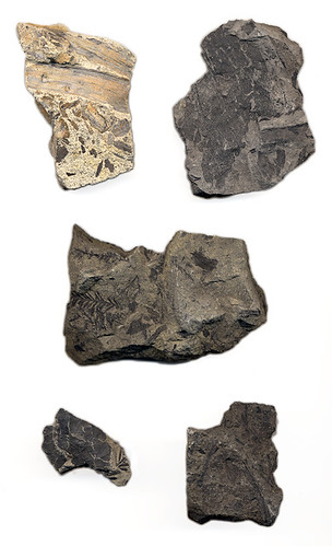 Fossils from the Okanogan