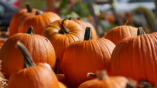 pumpkin 2019